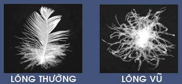 long-vu-la-gi-long-vu-vs-long-thuong